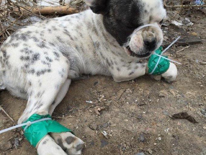 dog puppy tied