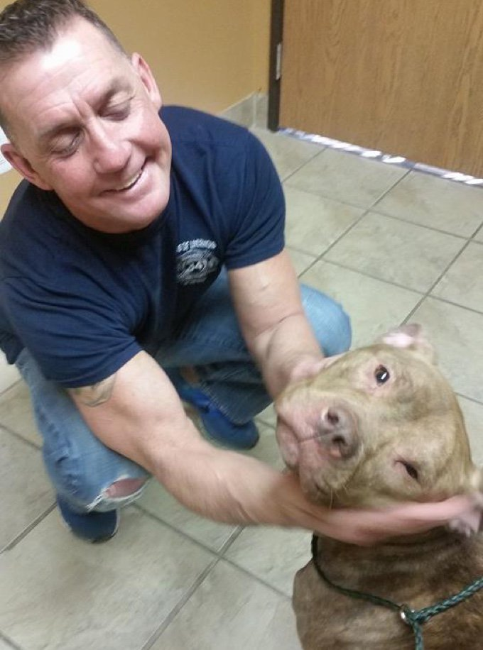 pit bull dog save fire