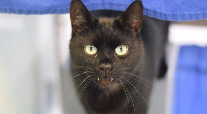 Rory chat noir vampire
