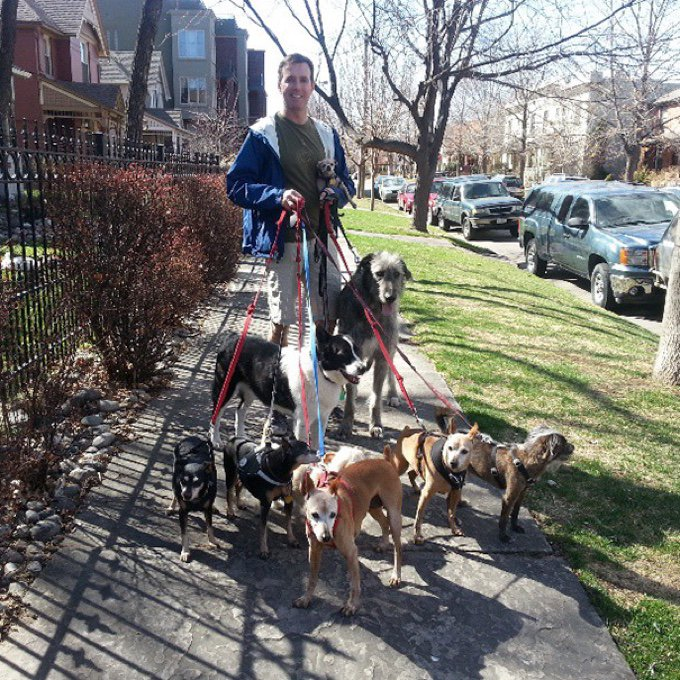 shelter-dogs-senior-02-03-2016
