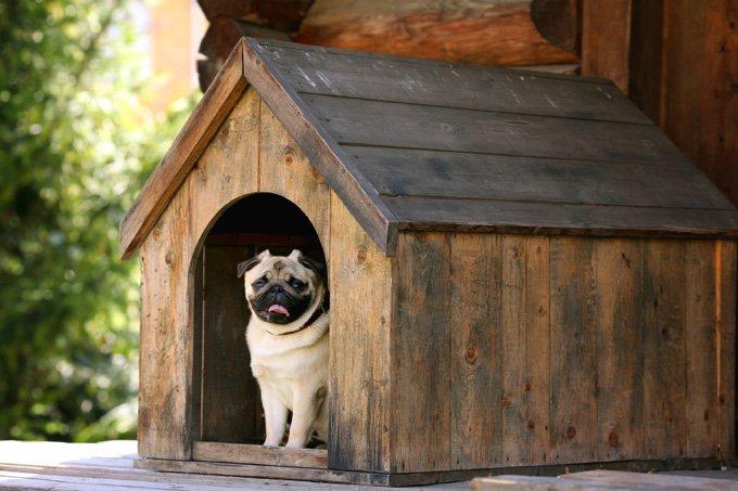 carlin chien niche
