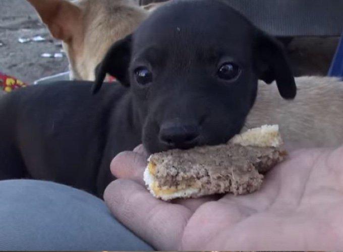 chien mangeant un hamburger