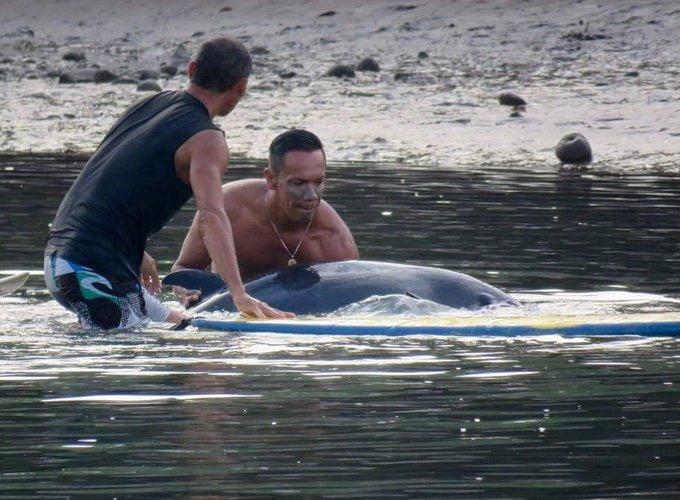 deux surfeurs sauvent un baleineau de la noyade