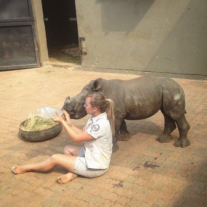 rhinocéros orphalin soigneur animalier