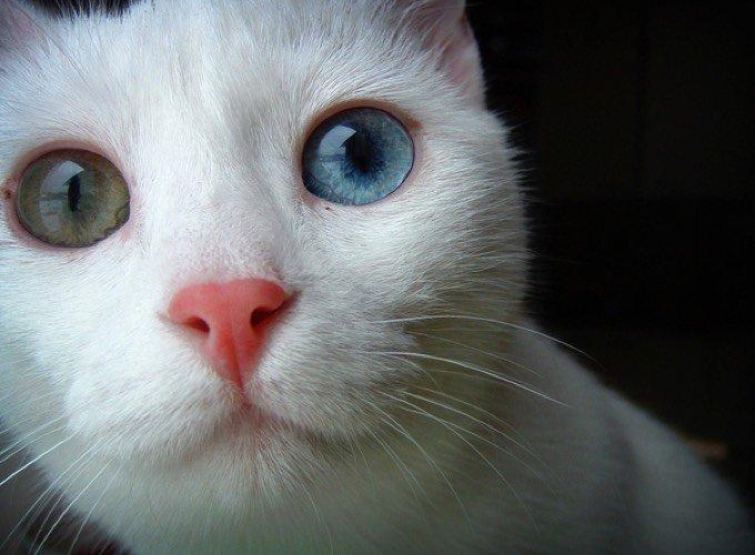nariz de gato
