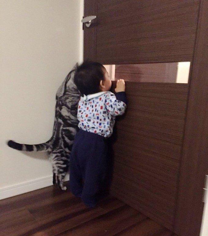 chat bébé porte