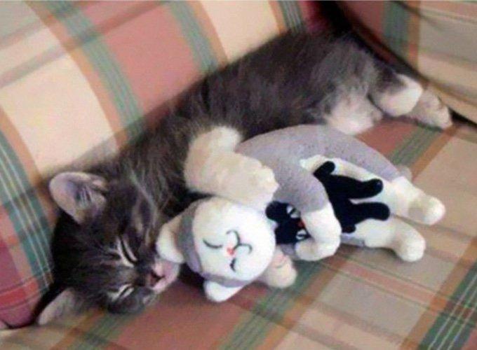 chat câlinant une peluche chat