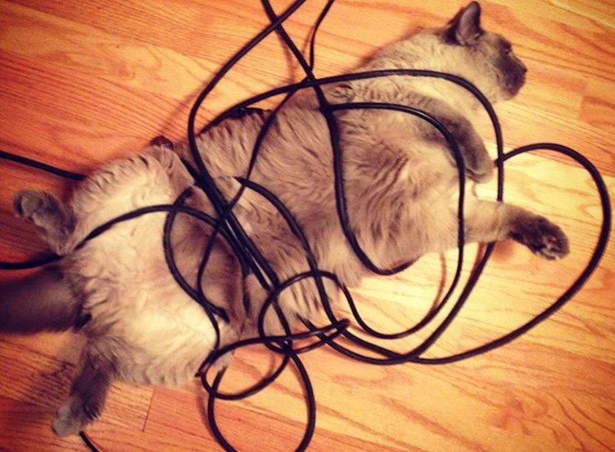 chat jouant avec des câbles d'ordinateur