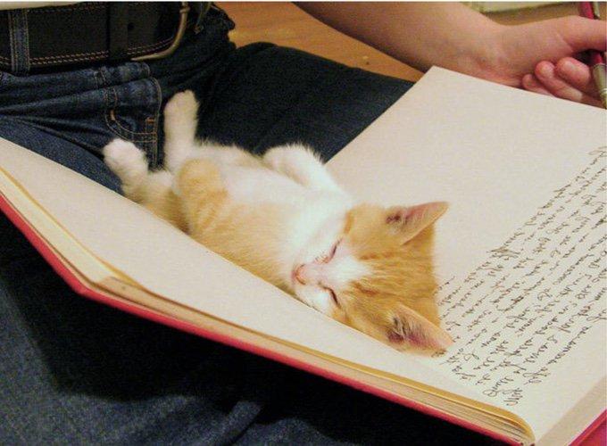 chaton allongé dans un livre ouvert