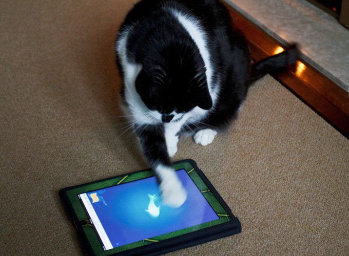 chat jouant sur un ipad avec un poisson