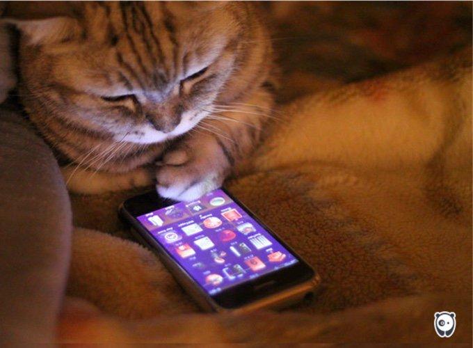 chat avec un iphone