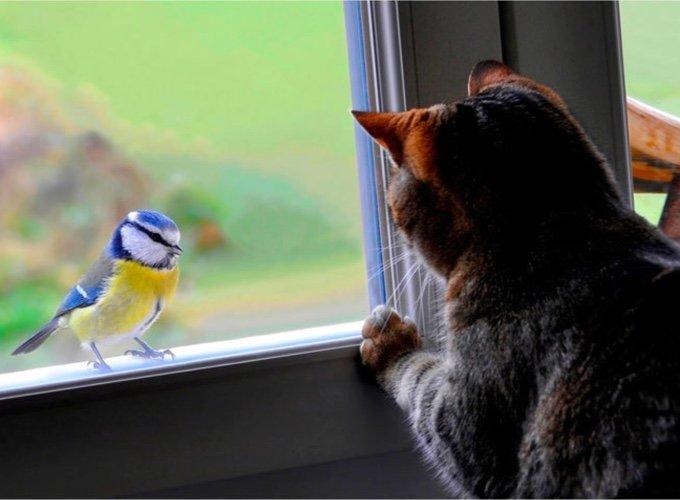 chat observant un oiseau par la fenêtre
