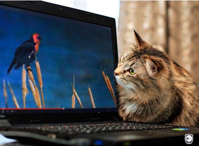 chat observant un oiseau sur l'écran d'un ordinateur