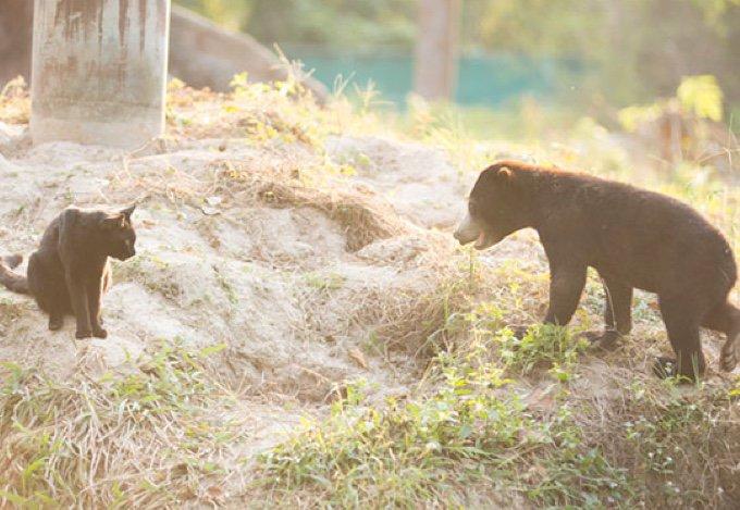 un chat et un ourson dans la forêt