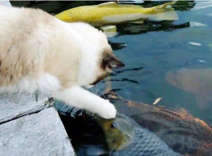 chat jouant avec des poissons