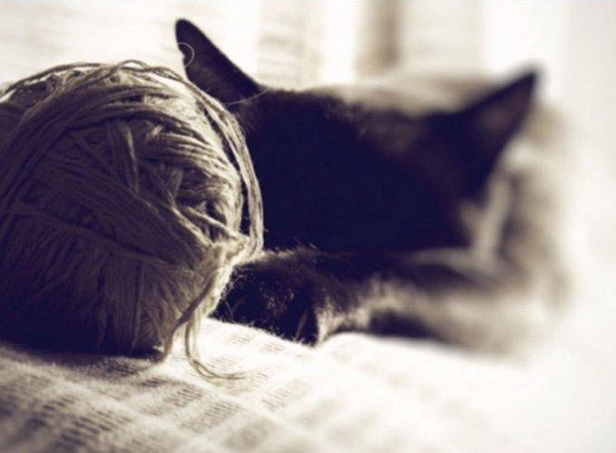 chat devant une pelote de laine