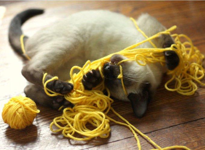 chat jouant avec une pelote de laine jaune