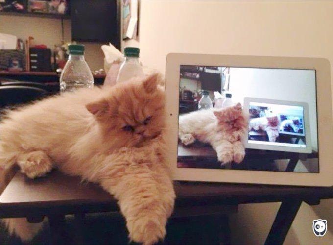 photo d'une photo d'une photo d'un chat