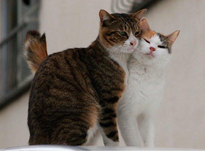 deux chats en train de se faire un câlin