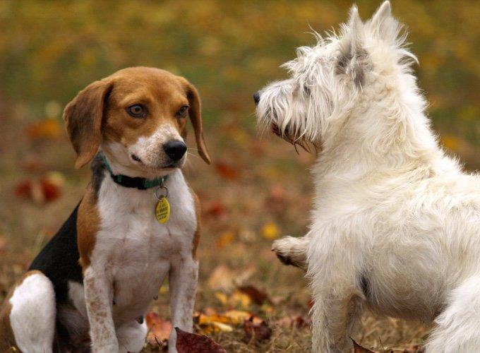 deux chiens dans les bois