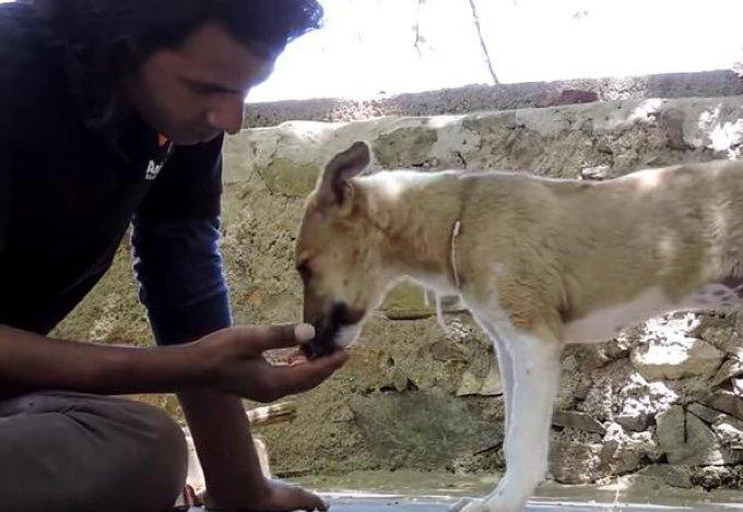 un homme donne a manger à un chiot