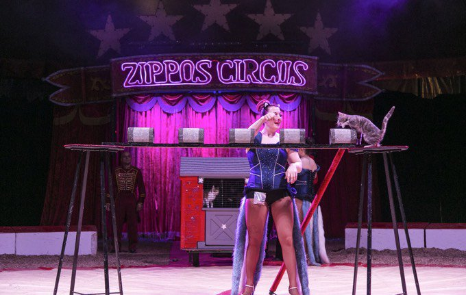 Chats cirque
