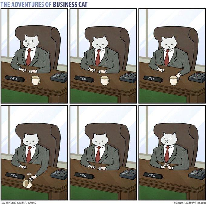 Business Cat, le chat patron