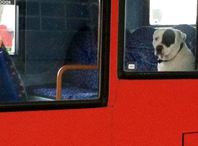 chien seul dans un bus