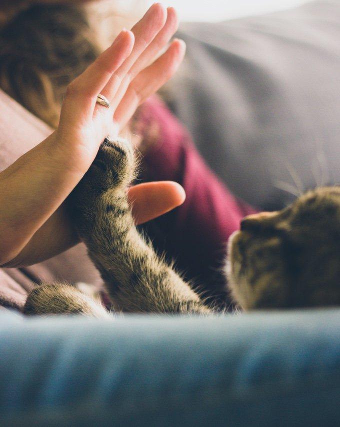 chaton qui tape dans une main avec sa patte