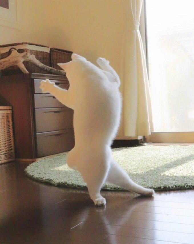 chat qui danse