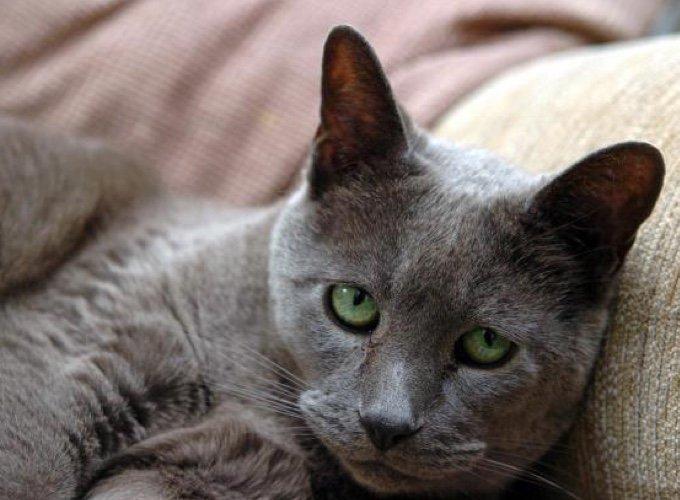 chat d'aveugle sur un canapé
