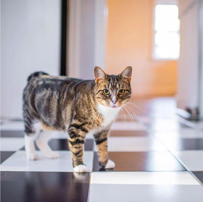 chat sur le carrelage de la cuisine