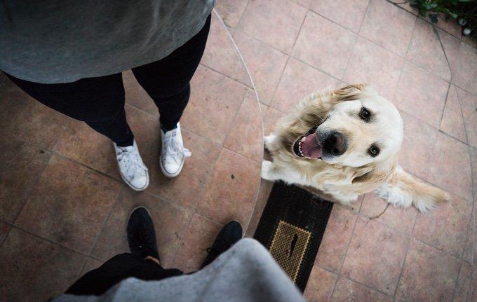 chien qui attend aux pieds de ses maitres