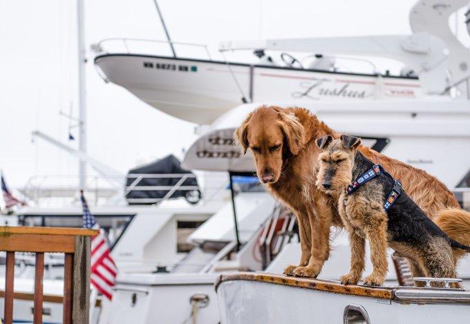 deux chiens sur un bateau