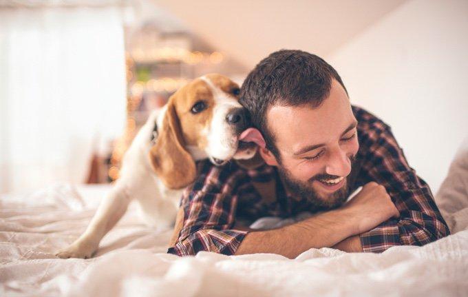 chien qui lèche son maitre sur son lit