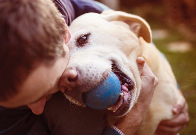 chien qui se fait caresser avec une balle dans la gueule