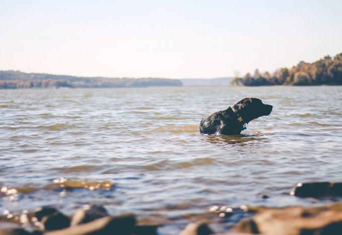 chien qui se baigne dans un lac