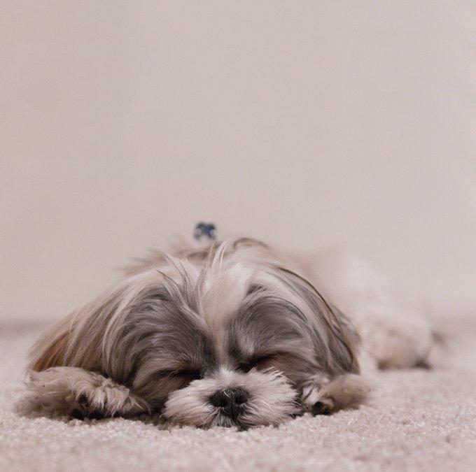 chien qui dort sur le sol