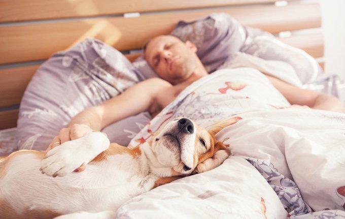 chien qui dort dans son lit avec son maitre