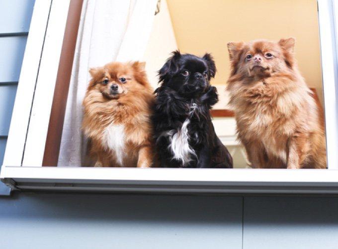 trois chiens sur la fenêtre