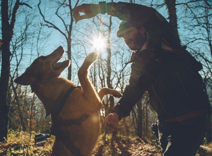 chien avec une gopro qui saute pour une friandise dans les bois