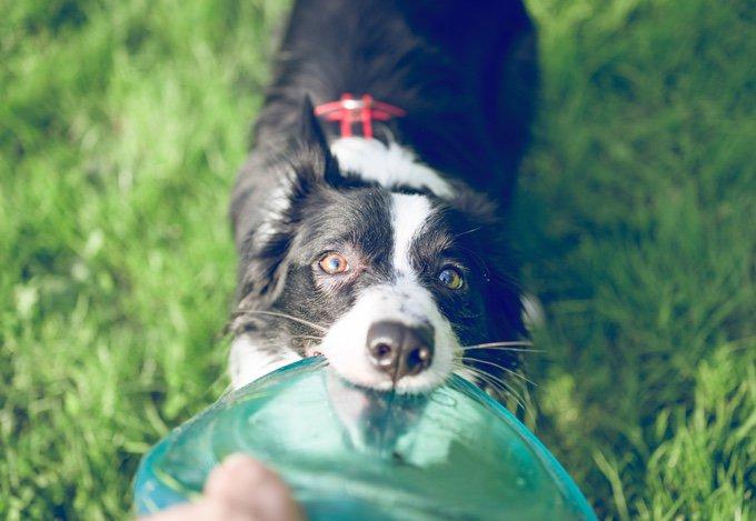 chien qui apporte un frisbee