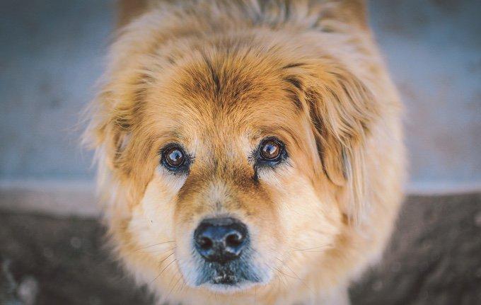 chien qui regarde la camera