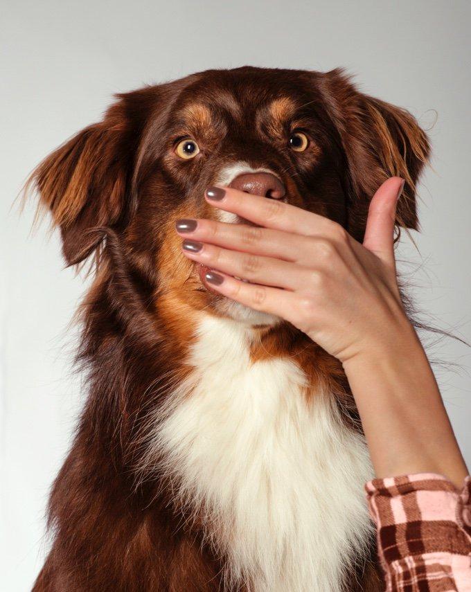 chien avec une main devant la bouche