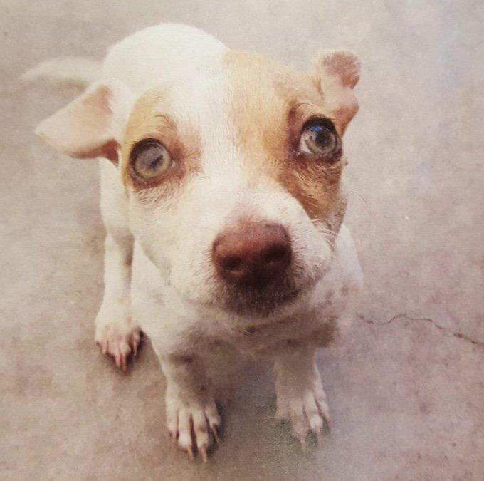 chien sauvé lors d'une intervention anti-drogues