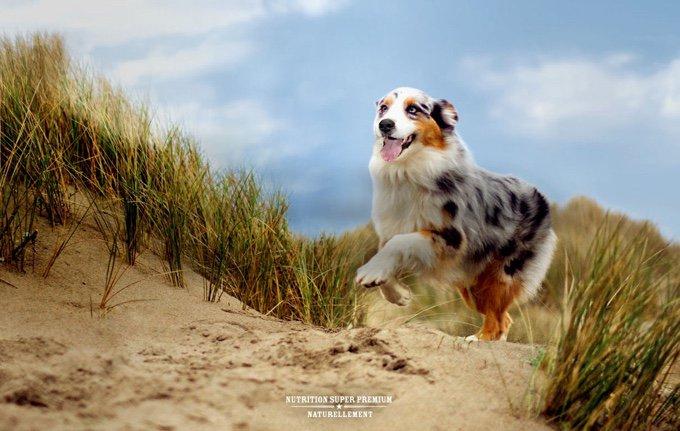 chien qui cours nutro
