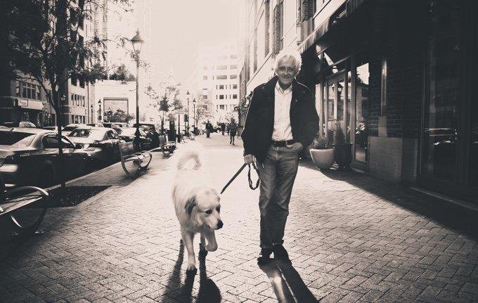 chien qui se promène dans la rue en compagnie d'un vieil homme