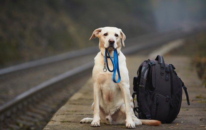 chien avec sa laisse et un sac a dos sur les bords d'un chemin de fer