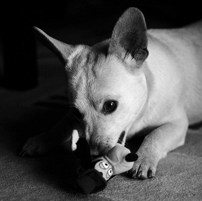 chien qui joue avec un jouet