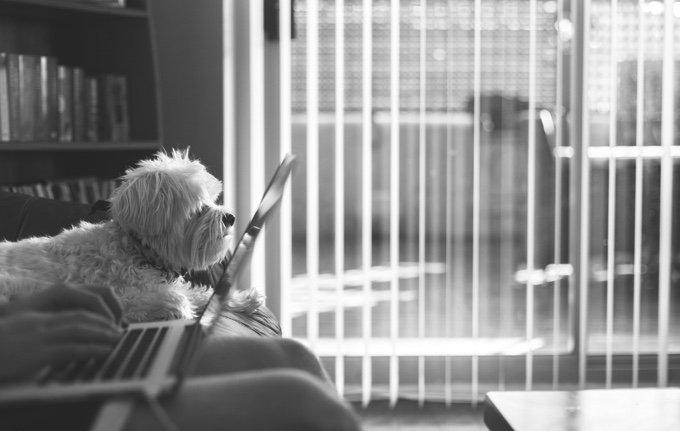 chien sur le canapé qui regarde la télévision